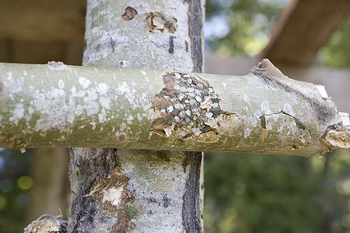 Treefort3web