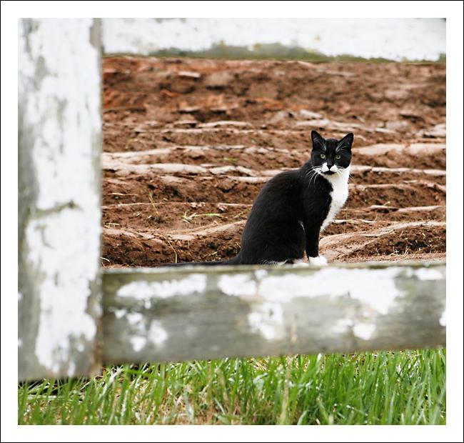 Kitty_kat_web