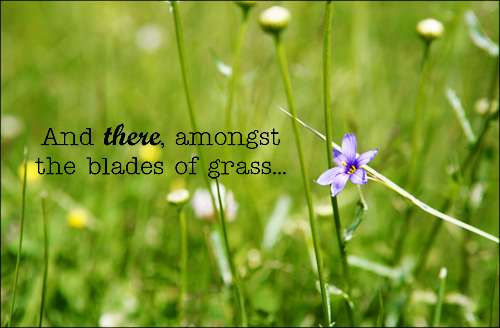 Blades_of_grass_web