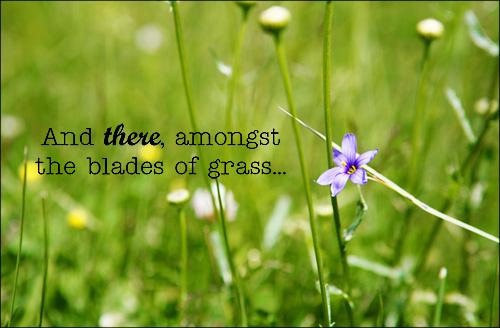 Blades_of_grass_web