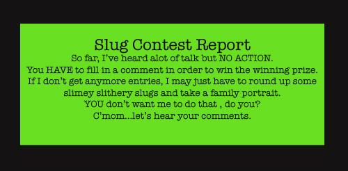 Slug_report