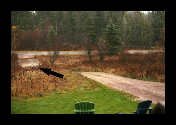 Flooded_driveway_copy_2
